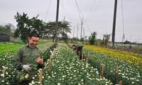 Мобилизация людских ресурсов на строительство новой деревни в пригороде Ханоя