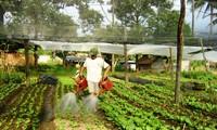 Повышение роли союзов крестьян в строительстве новой деревни