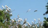 Птичий остров Чиланг-Нам – великолепное место, где обитают аисты