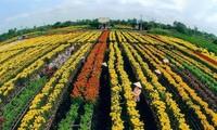 Достопримечательности провинции Донгтхап