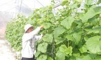 Развитие сельского хозяйства в условиях засоления почвы