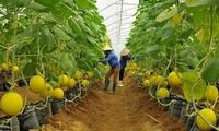 Провинция Биньзыонг развивает системы реализации сельхозпродукции