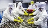 Áp thuế chống trợ cấp là bất công với các doanh nghiệp chế biến và xuất khẩu tôm Việt Nam