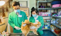 Tăng cường kiểm soát và tiến tới loại trừ bệnh dại tại Việt Nam
