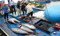 Việt Nam nỗ lực gỡ thẻ vàng của EC và phát triển bền vững nghề cá