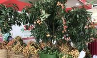 Vải thiều Bắc Giang được quảng bá tại Hội nghị giao thương trực tuyến nông sản, thực phẩm Việt Nam – Singapore 2020