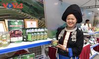 Tẩn Mý Dao khởi nghiệp từ cây dược liệu bản địa