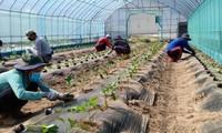 Hàn Quốc cho phép lao động Việt Nam hết hạn hợp đồng ở lại làm thời vụ