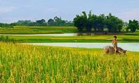 Hát lên Việt Nam - Niềm hãnh diện về quê hương tươi đẹp