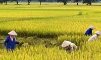 Vui mùa cày cấy - Trần Thị Thanh Nga, LIên bang Nga
