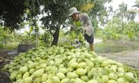 Kaum tani Dong Thap mengekspor produk agribisnisnya