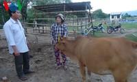 Grup petani yang punya hobi bersama di propinsi NinhThuan