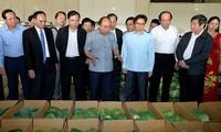 Melepaskan sumbah bagi pertanian Vietnam