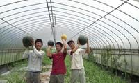 Berupaya menyosialisasikan brand hasil pertanian Vietnam di Jepang