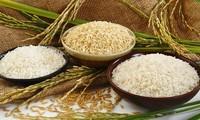 Afrika Selatan- Pintu gerbang bagi beras Vietnam untuk masuk pasar Afrika