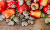 Produk produk  pertanian utama yang diekspor Vietnam