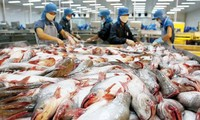 Vietnam's tra fish export reaches all-time high