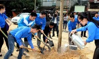 Hanoi to plant up to 120,000 new trees this spring