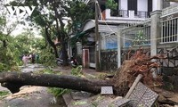 Storm Noul weakens into tropical depression after wreaking havoc on central Vietnam