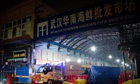 WHO team arrives at Wuhan seafood market as part of search for origin of coronavirus