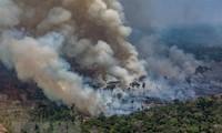 南美七国签署亚马孙雨林保护协议