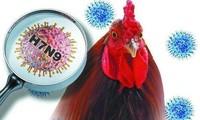 ВОЗ: Необходимо проводить проверки для предотвращения заражения людей H7N9