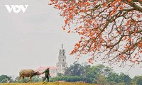 Красота мартовских цветов красного хлопкового дерева