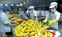 Увеличение стоимости вьетнамской экспортной сельскохозяйственной продукции
