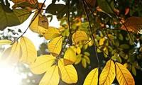 Песни про осень