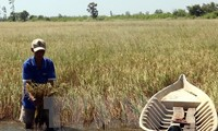 Vietnam to use foreign aid for fighting drought, saline intrusion