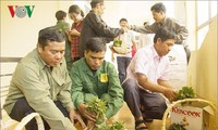 Breeding plants offered to preserve Ngoc Linh ginseng