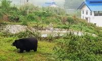 Ninh Binh sanctuary saves bears from bile farming