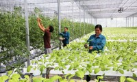 Vietnam, Tanzania foster agriculture cooperation
