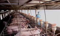 Conference discusses expanding pig farming