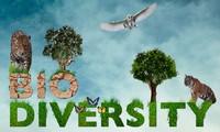 Đa dạng sinh học - giải pháp quan trọng cho phát triển bền vững