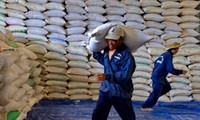 Vietnam is to export 300,000 tons of rice/ year to Guinea