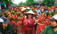 Vietnam's litchi enters Canadian market