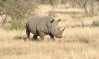 Heartwarming video to reduce rhino horn trafficking takes flight in Vietnam