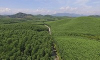 4,200 ha of forests certificated by FSC