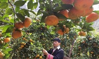 Dao ethnic war veteran escapes poverty by growing fruit trees