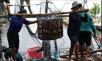 Agro-forestry-fisheries sector enjoys trade surplus of 3.3 billion USD in eight months