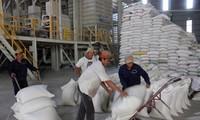 Việt Nam thắng thầu cung cấp 800.000 tấn gạo cho Philippines