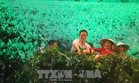 Festival hoa Đà Lạt 2017: Khai hội Tơ - Trà phố núi B'Lao