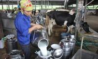 Lần đầu tiên Việt Nam xuất khẩu sữa chính ngạch sang Trung Quốc