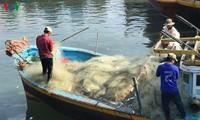 Bình Thuận: Chuyến biển đầu năm thuận lợi, ngư dân phấn khởi vươn khơi