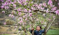 Thính giả quan tâm tới vẻ đẹp Phong Nha-Kẻ Bàng và hoa ban Tây Bắc