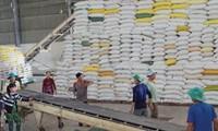 Năm 2020, xuất khẩu gạo đạt 1,9 tỷ USD sau 8 tháng