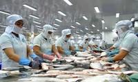 Xuất khẩu cá tra sang Châu Âu 5 tháng giảm