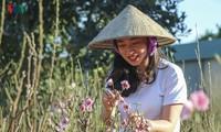 Thanh Hung flower village in Dien Bien bustling in the build-up for Tet