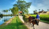 Programa nacional para la construcción del nuevo campo vietnamita